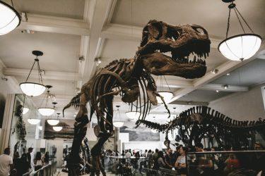アメリカ自然史博物館の敷地拡張プロジェクトが開始