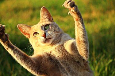全米初の猫の爪除去を禁止する法案にアンドリュー・クオモ州知事が署名