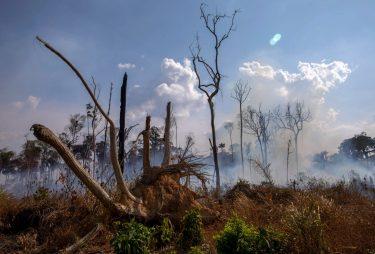 未だ燃え続けるアマゾンの森林に対して、私たちにも出来る事