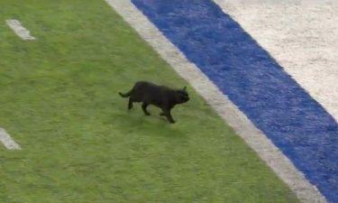 NFLのゲーム中、黒猫がフィールドに乱入