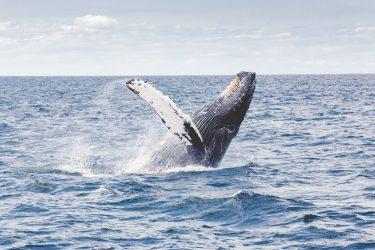 ロックアウェイビーチでザトウクジラが発見される