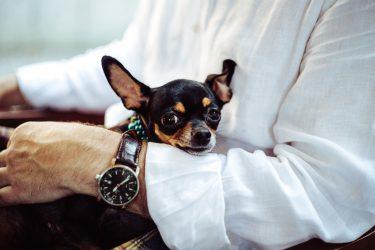 ペットを連れて日本へ帰国する方法(犬と猫の場合)