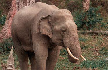 ブロンクス動物園の象は、法的に「人」ではない?!