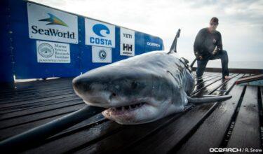 相次ぐサメの目撃情報により、一部のビーチが一時閉鎖